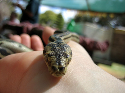 Great photo of baby python
