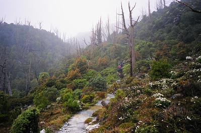 On the return journey through Artichoke valley, we were bathed in mist. It felt like we were walking through some sort of alien wonderland.