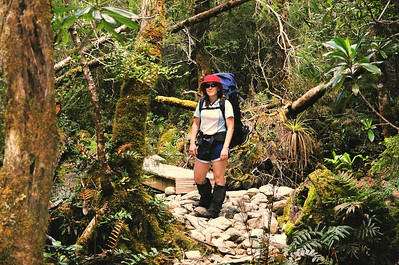 On day two of our Frenchman's cap adventure, we walked through some beautiful temperate rainforest.