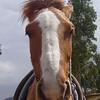 mi caballo Cody