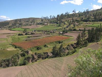 various crop fields