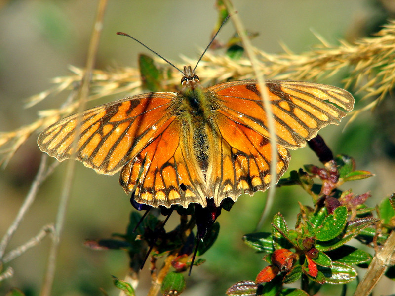 Butterflies abound, even at these heights