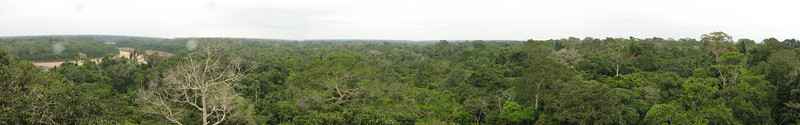 Scene from the top of the observation tower at the Posadas Amazonas lodge