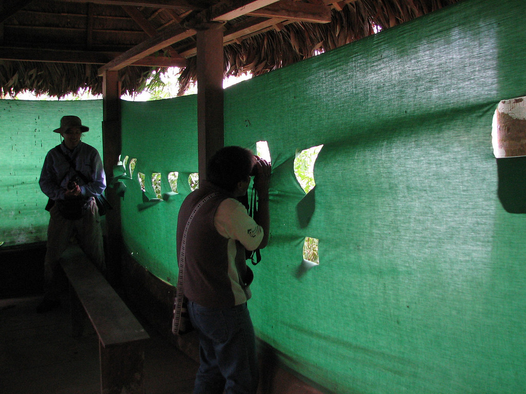 The blind at the clay lick where we watched for Parrots