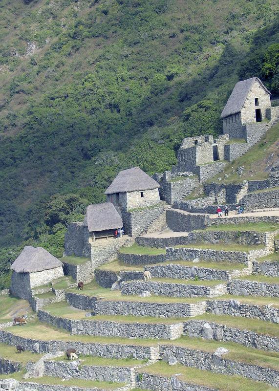 Buildings & terraces of Machu Pichu, Peru