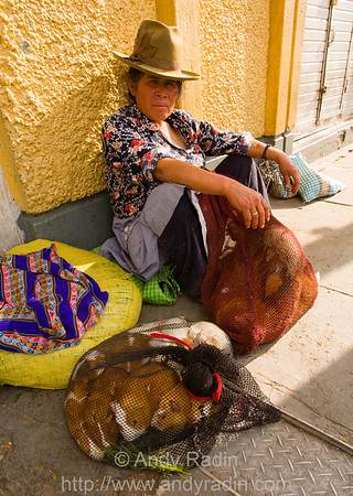 Huaraz, Peru - guinea pigs for sale