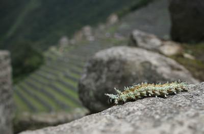 INCA Caterpillar