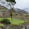 Lone tree grows on the plaza at Machu Picchu.