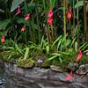 Masdevallia vetchiana Orchid