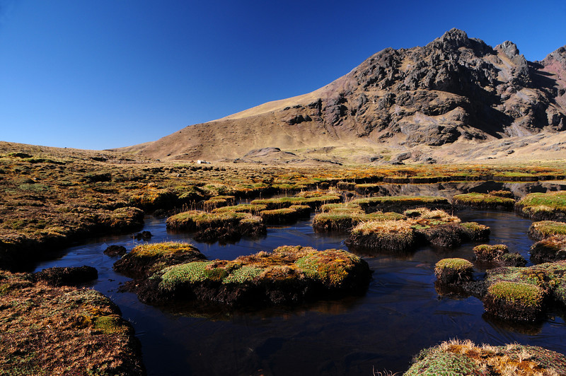 Around my campsite north of Calca, Peru at 4342m