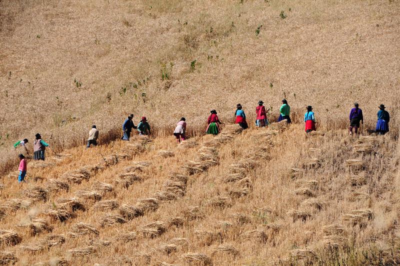 Harvest time nr Sondor Ruins. Peru