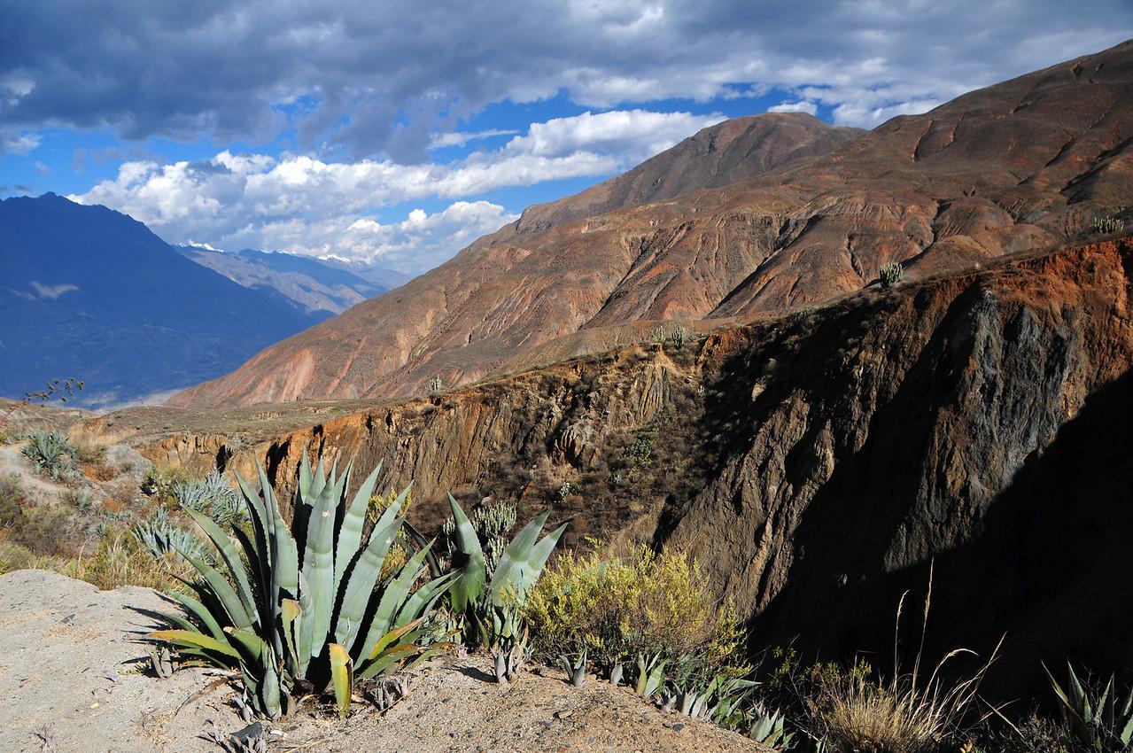 Ancos - La Pampa road nr Yupan. Peru