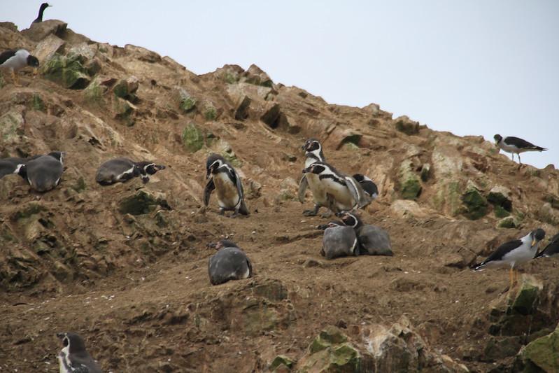 Penguins!!!!