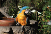 They had a couple cool parrots outside the restaurant that we ate lunch at - <br />Restaurante Tunupan