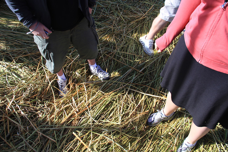 Standing on the reeds - it's squishy, but not scarily - imagine standing on a giant lump of moist hay.