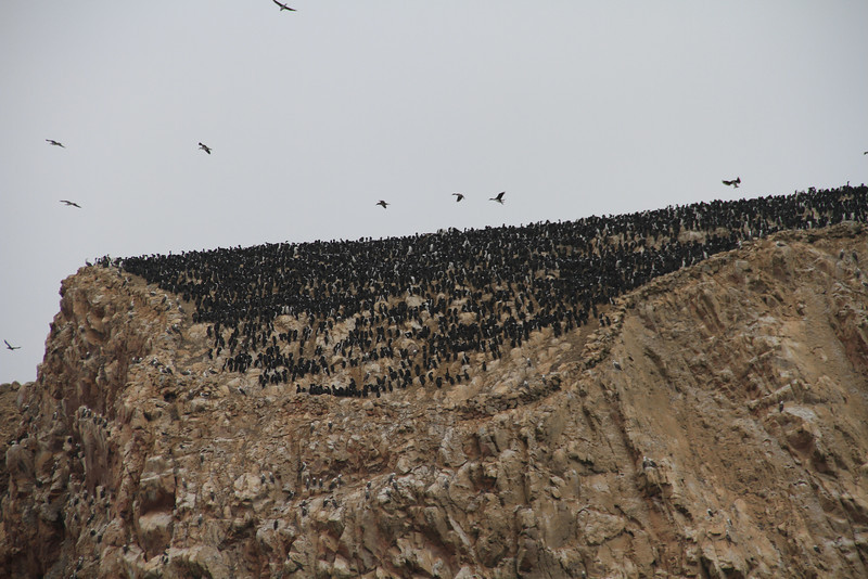 Like I said a few pictures back, yeah, just a few birds.