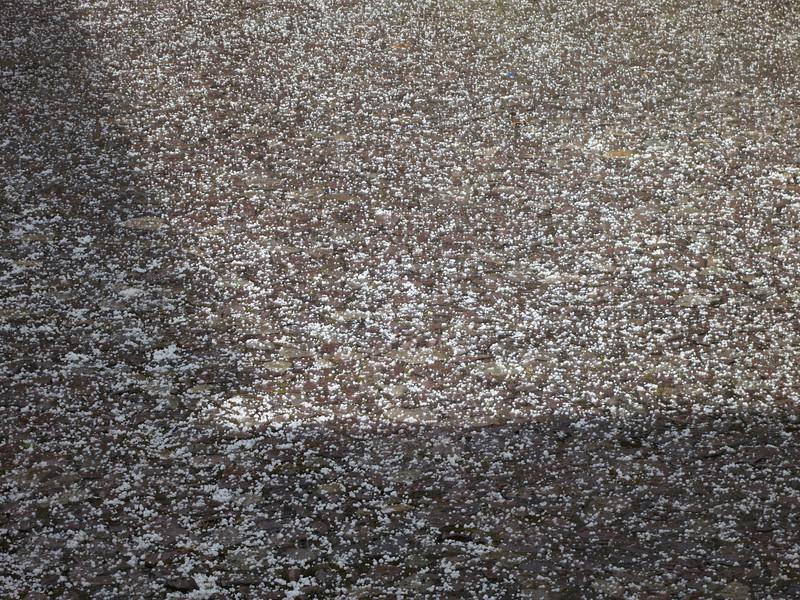 Soo much hail. Marble sized!