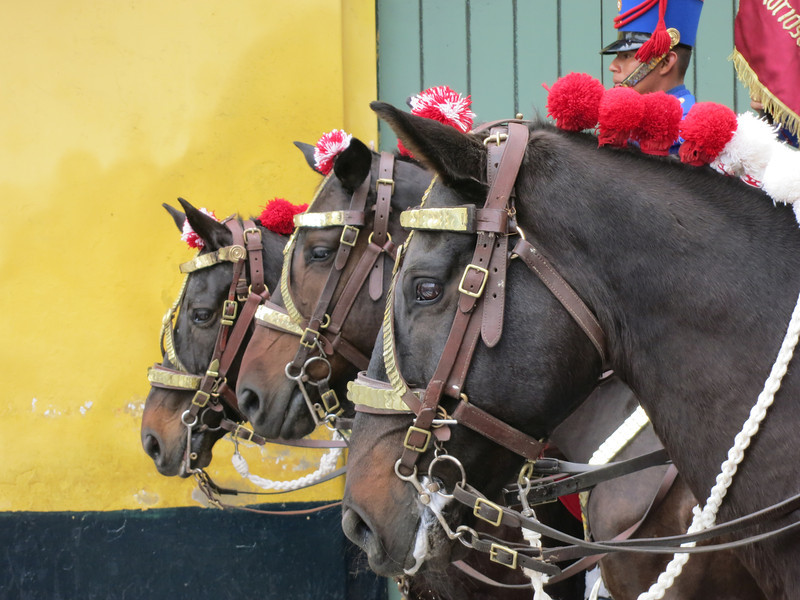 Horses ready to participate in the changing of the guard