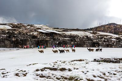 Llamas join us.