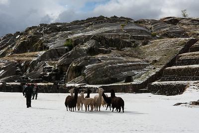 Llamas at the ruins.