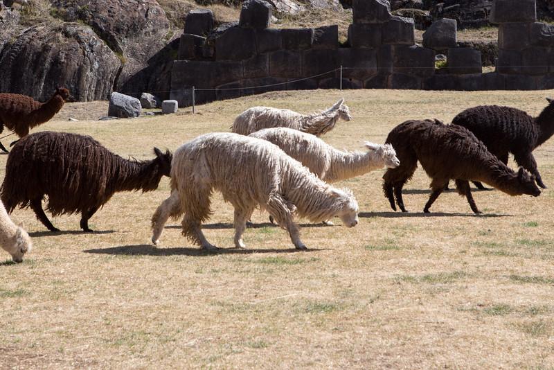Cuzco-5060