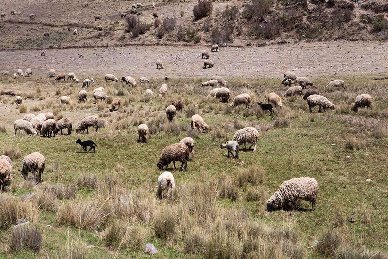 Cuzco-5174