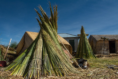 Drying reeds.