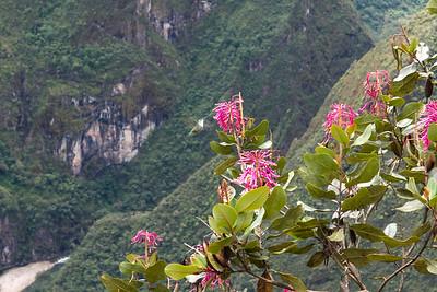 Machu Picchu - up to the Sun Gate. Aguas Calientes, Peru.