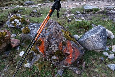 My poles match the moss...