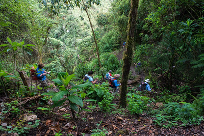 Jungle treck.