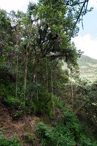 Jungle like territory.