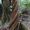 112 2 Tahuayo trail_DSC01052