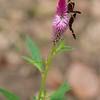 Once de Agosto: Butterflies on flower