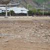 Lima: San Felipe coast: Toward pair of Double-striped Thick-knee