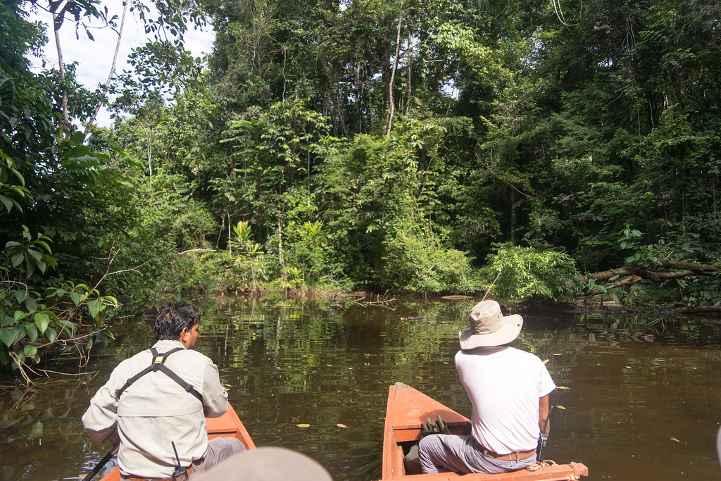 Day 7 - Amazon Rainforest