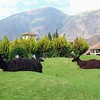 LLamas at the Aranwa Resort in Urubamba