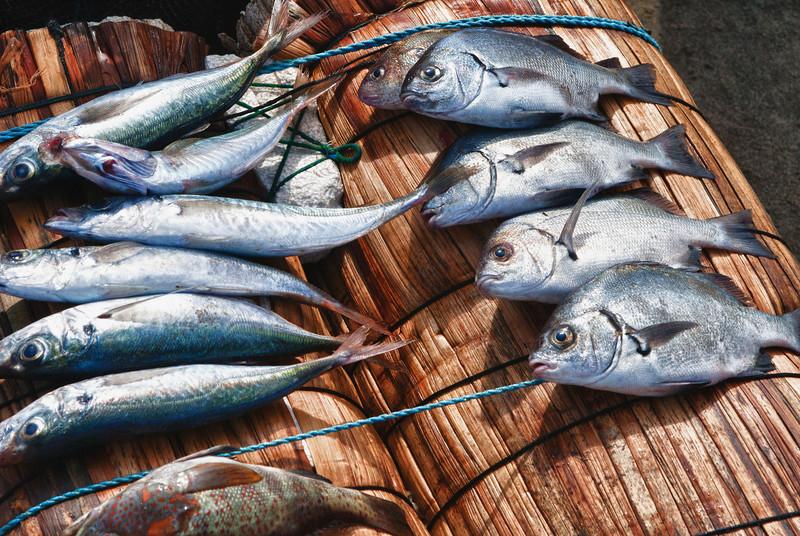 De magere vangst van de dag of, en ik hoop het voor de visser en zijn gezin, de overschot die nog aan de man moet gebracht worden. <br /> <br /> Strand van Pimentel - Chiclayo - Lambayeque - Peru