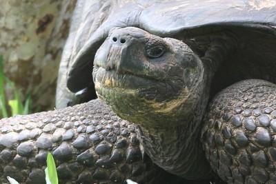 Peru, Ecuador, Galapagos Reptiles and Amphibians