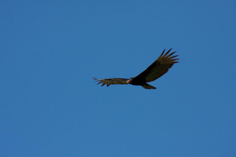 (Photo 0291)  Flying high!