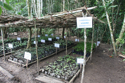 The nursery: thousands of plants will be used in the reforestation.
