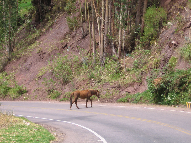 There are only steep hillsides on either side of the road.  Not sure where he's trying to go...