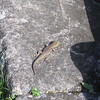 One of Machu Picchu's mysterious residents...