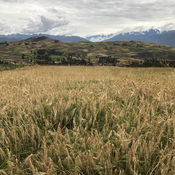 Altiplano near the Chinchero District