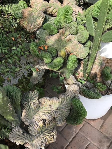 Botanical Gardens, Lima