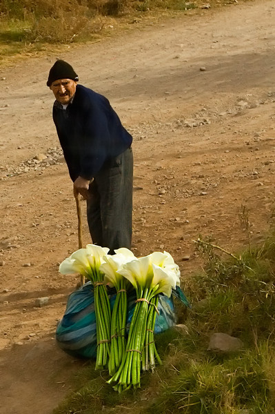 Man and his Lillies on the side of the road.