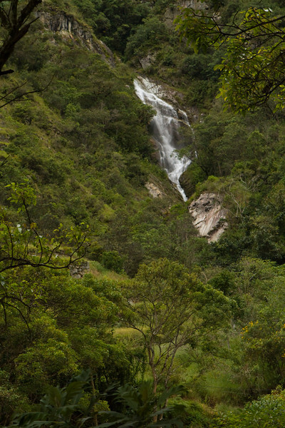 Beautiful scenery on the train ride thorough the rain forest.
