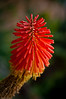 Interesting and beautiful flower