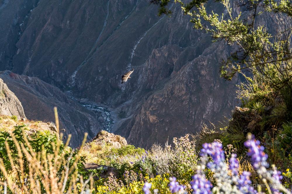 trekking colca canyon