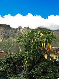 Peru travels-257