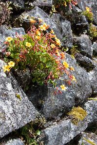 Inca Trail Day 3-95